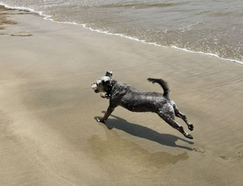 Dogs on holiday: it's ok at North Base