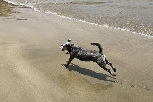 Louie on Paihia beach