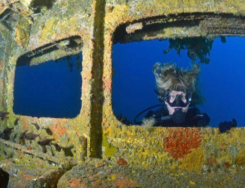 Dive into Northland's Underwater World