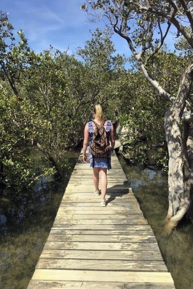 Waitangi-Haruru Falls walk